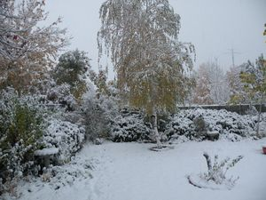 Snow oct 24 2012 003