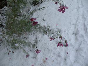 Snow oct 24 2012 002